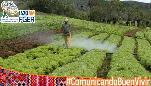 Pueblos indígenas piden declarar pesticidas inconstitucionales