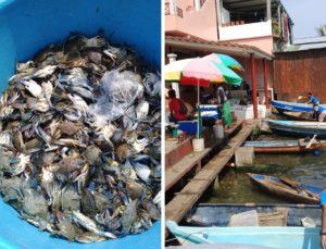 Comerciantes de mariscos afectados por crisis